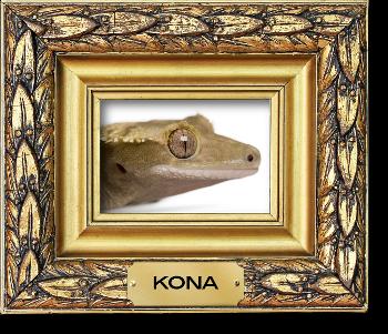 Kona Macphee