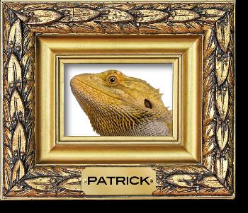 Patrick Andrews